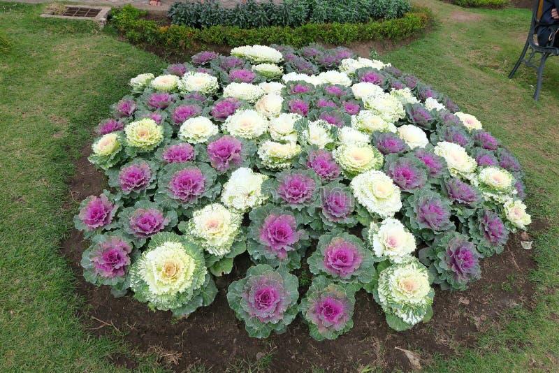 Gekleurde kooldecoratie in een tuin stock foto