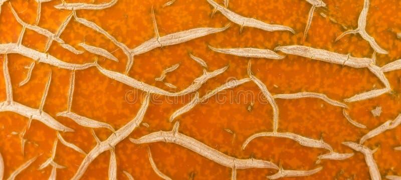Gekleurde oranje en azuurblauwe vlekken voor achtergrond stock illustratie
