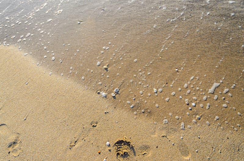 Gekleurde overzeese shell die zich in het gouden strandzand bevinden, sluit omhoog royalty-vrije stock afbeelding