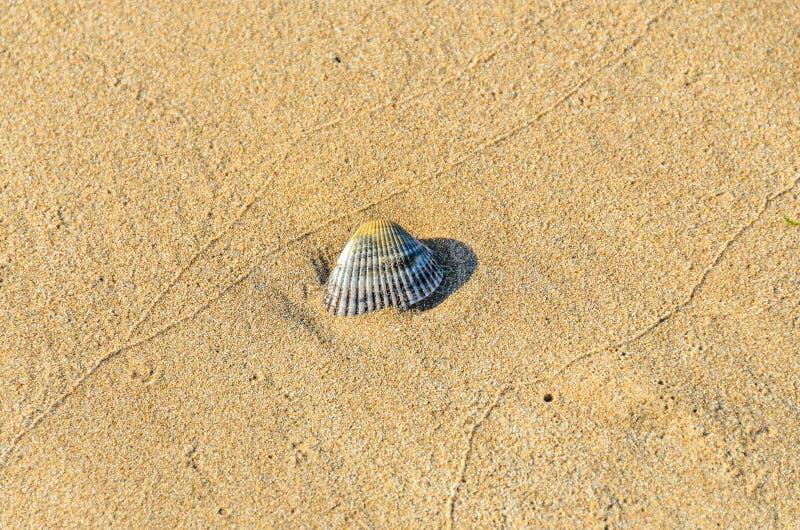 Gekleurde overzeese shell die zich in het gouden strandzand bevinden, sluit omhoog royalty-vrije stock foto