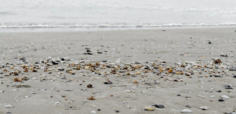 Gekleurde overzeese shells in het gouden strandzand dichtbij zeewater, stock foto's