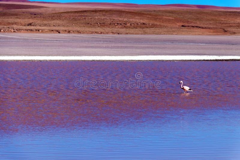 Gekleurde Rode Altiplanic-Lagune, een ondiep zout meer in het zuidwesten van Altiplano van Bolivië royalty-vrije stock foto