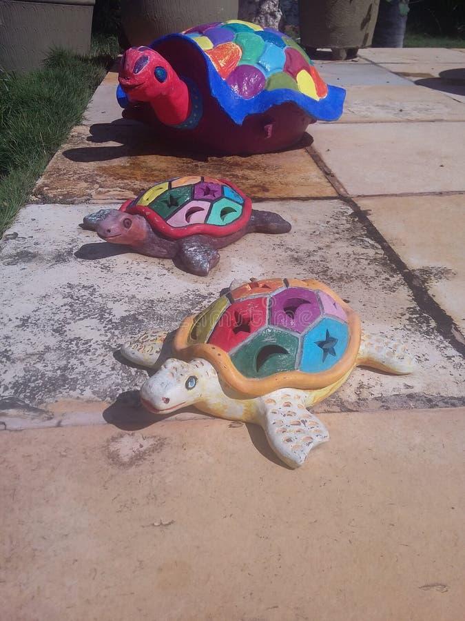 Gekleurde schildpadden royalty-vrije stock afbeelding