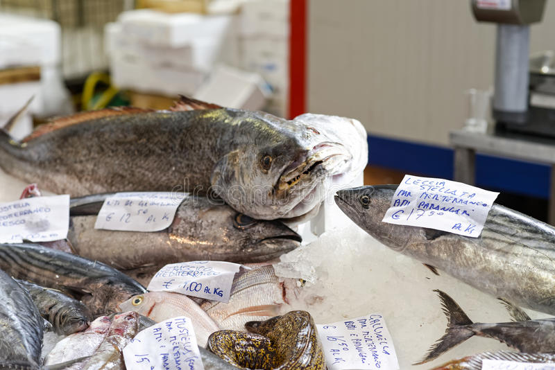 Gekleurde vissen royalty-vrije stock fotografie
