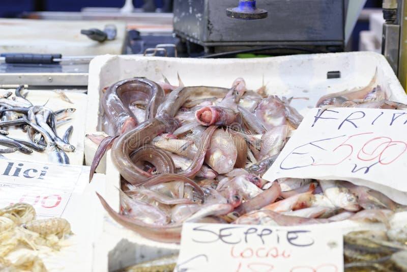 Gekleurde vissen royalty-vrije stock foto
