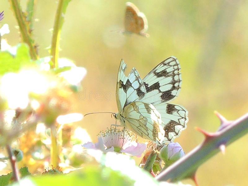 Gekleurde vlindertribune in de installaties stock afbeeldingen
