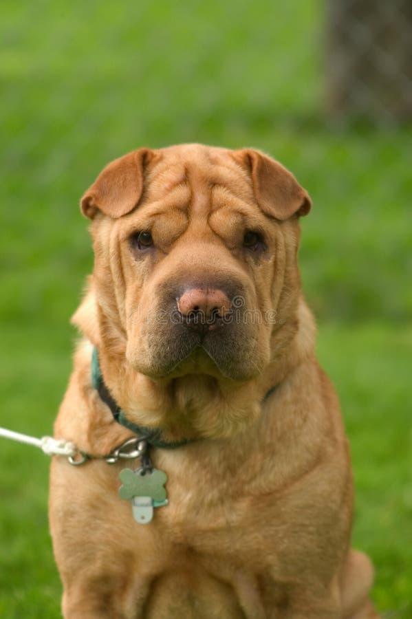 Geknitterter Hund lizenzfreie stockfotos