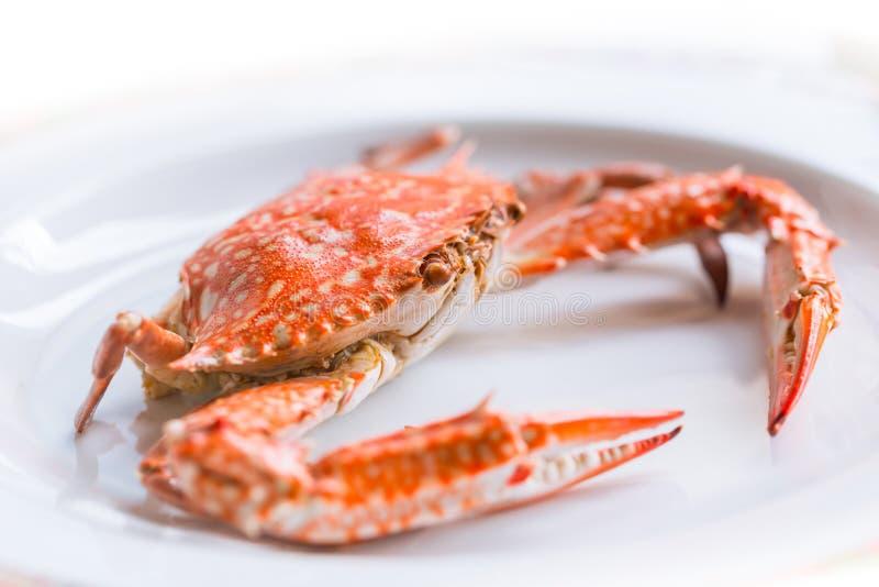 Gekochte blaue Krabbe auf lokalisiertem Weiß lizenzfreie stockfotos