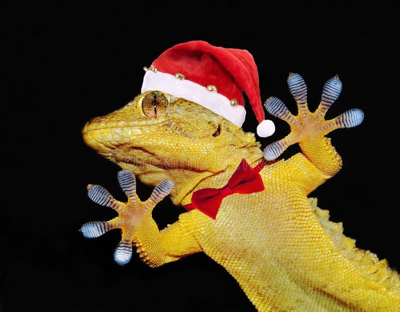 Gekon z Santa Claus kapeluszem i łęku krawatem który wita everyone obraz royalty free