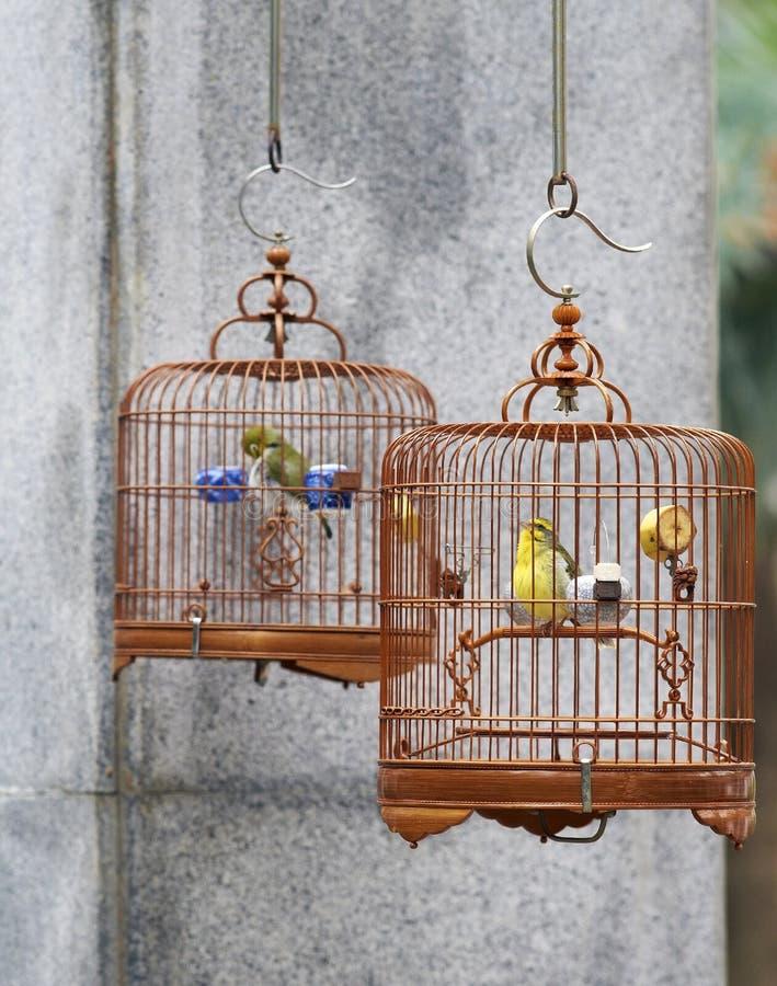Gekooide liedvogels royalty-vrije stock foto