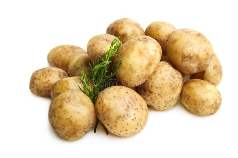 Gekookte aardappels met dille royalty-vrije stock afbeeldingen