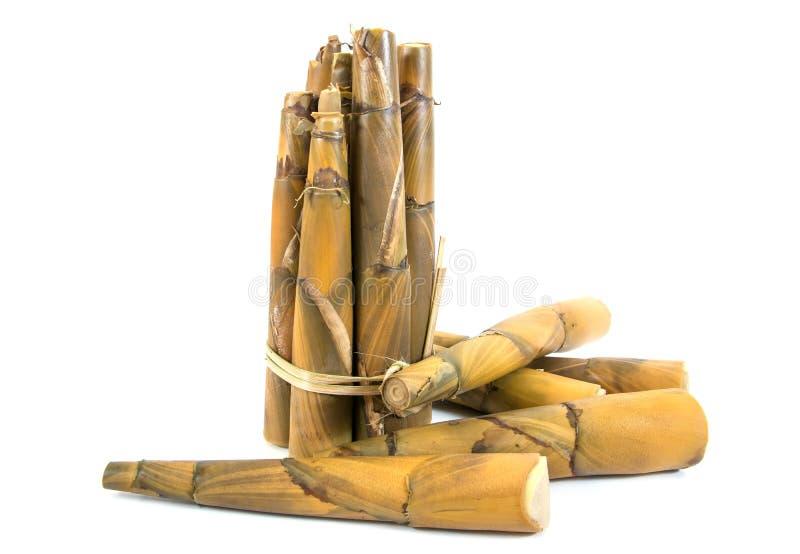 Gekookte bamboespruiten royalty-vrije stock afbeeldingen