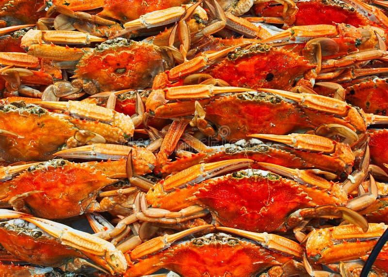 Gekookte Blauwe Zwemmer Crabs, Sydney Fish-markten, Australië stock afbeeldingen