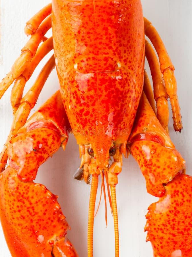 Gekookte de plattelander kookte rode zeekreeft stock afbeelding