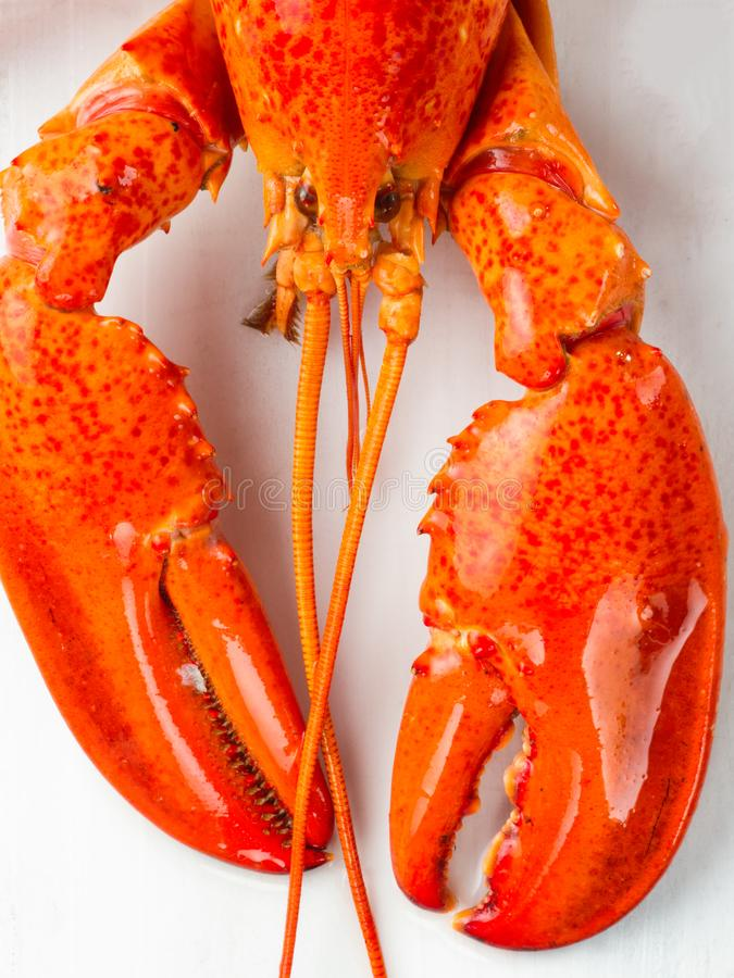 Gekookte de plattelander kookte rode zeekreeft royalty-vrije stock foto's