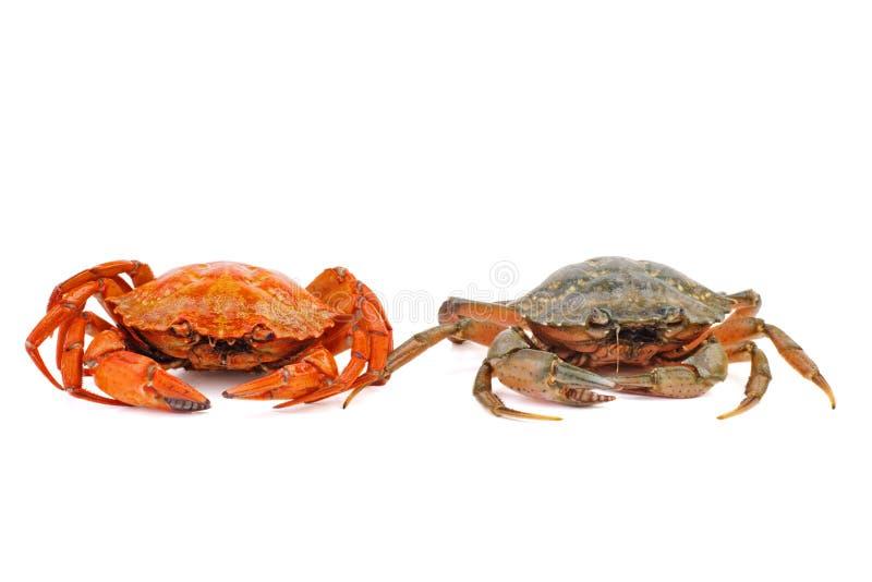 Gekookte en levende krabben tegen een witte achtergrond royalty-vrije stock foto's