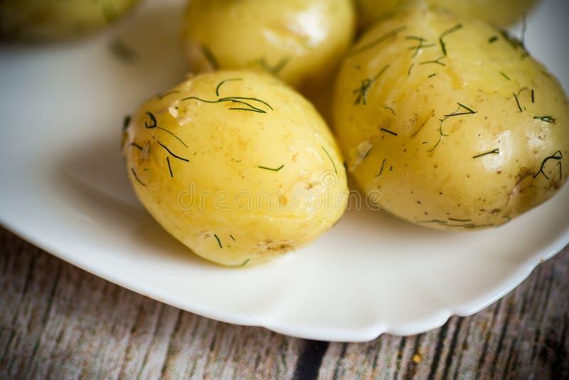 Gekookte jonge aardappel met boter en dille in een plaat stock fotografie