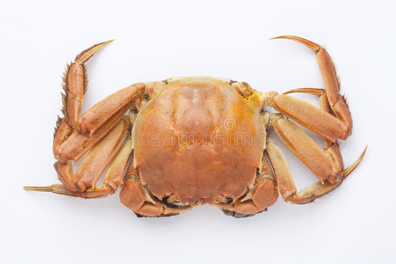 gekookte krab royalty-vrije stock foto's