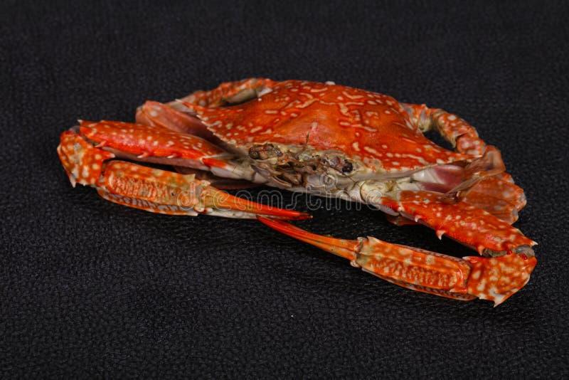 Gekookte krab - klaar voor eet stock afbeeldingen