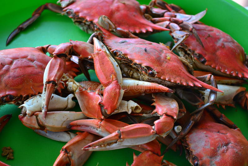 Gekookte Krabben stock fotografie