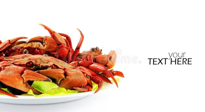 Gekookte krabben op de plaat stock afbeelding