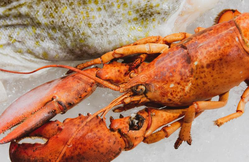 Gekookte Maine-zeekreeft, Zeekreeftachtergrond stock afbeelding