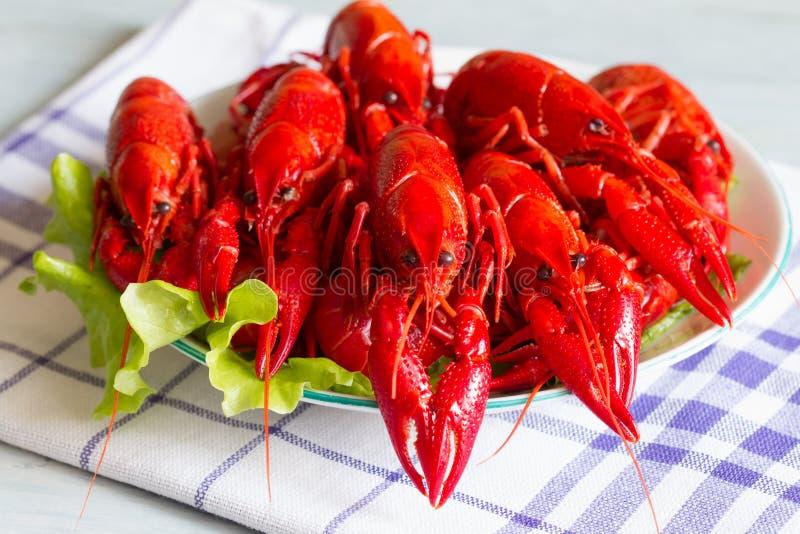 Gekookte rode rivierkreeften op het concept van het plaatvoedsel royalty-vrije stock foto