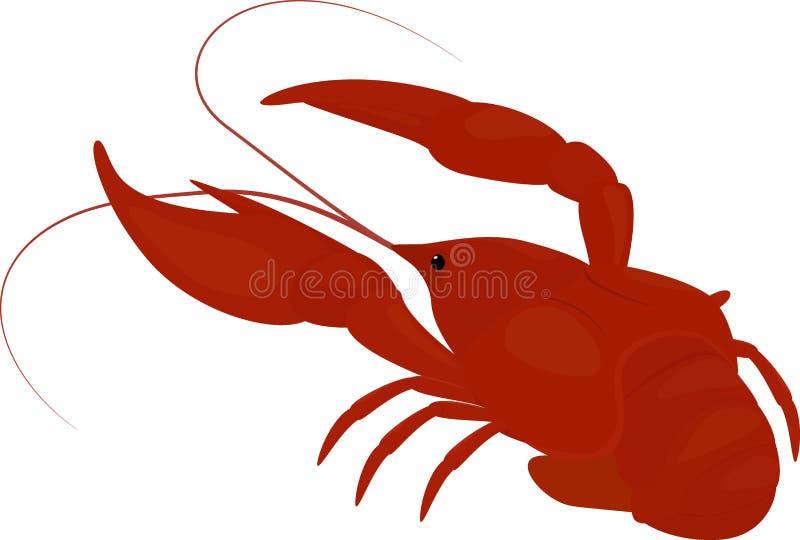 Gekookte rode rivierkreeften, rivierkreeften royalty-vrije illustratie
