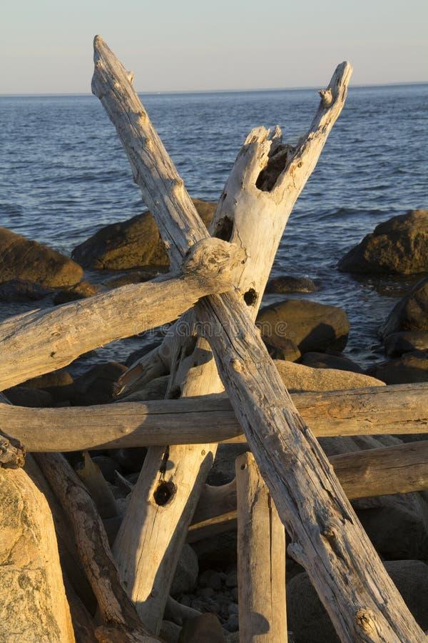 Gekreuztes Treibholz gestapelt auf Felsen, Hammonasset-Nationalpark, Madi lizenzfreies stockfoto