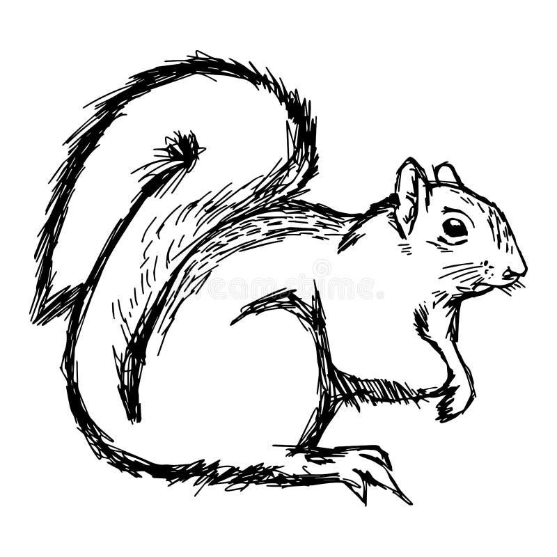 Gekritzel des Illustrationsvektorhandabgehobenen betrages des Eichhörnchens lokalisiert auf wh vektor abbildung