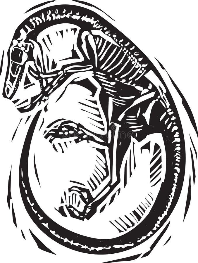 Gekruld Velociraptor-Fossiel royalty-vrije illustratie