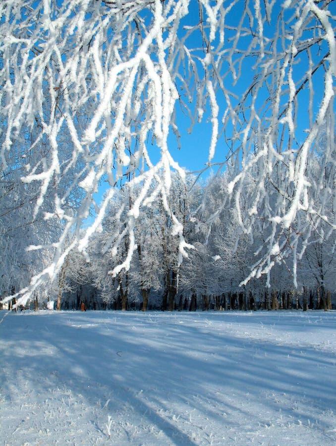 Gelée de l'hiver. images stock