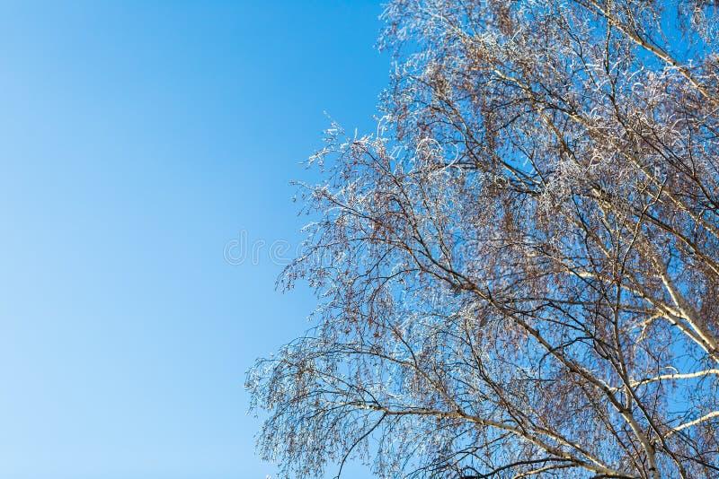 Gelée sur la branche d'arbre dans la fin  image stock
