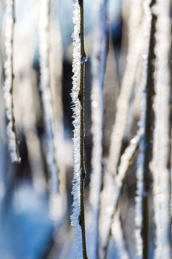 Gelée sur la branche d'arbre dans la fin  photographie stock