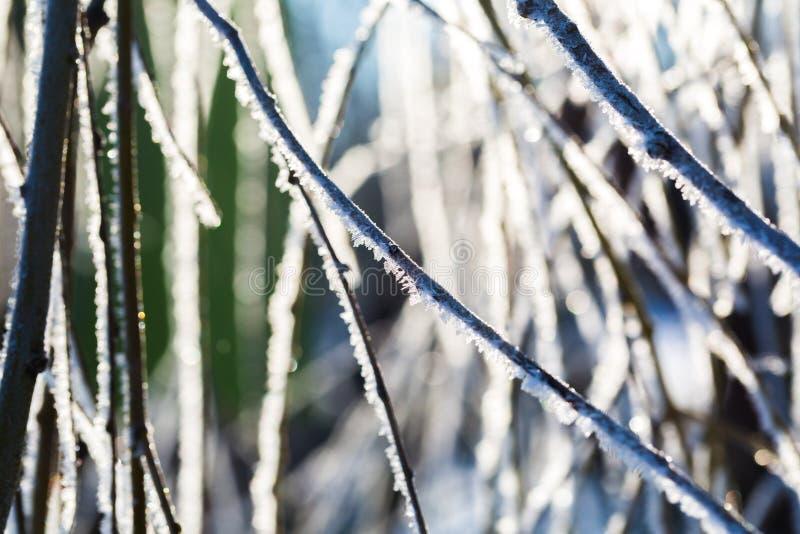 Gelée sur la branche d'arbre dans la fin  photographie stock libre de droits