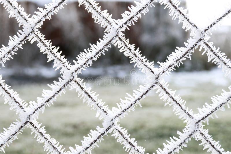 Gelée sur la grille photographie stock libre de droits