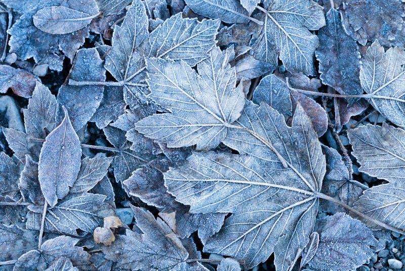 Gelée sur les feuilles, plan rapproché photos libres de droits