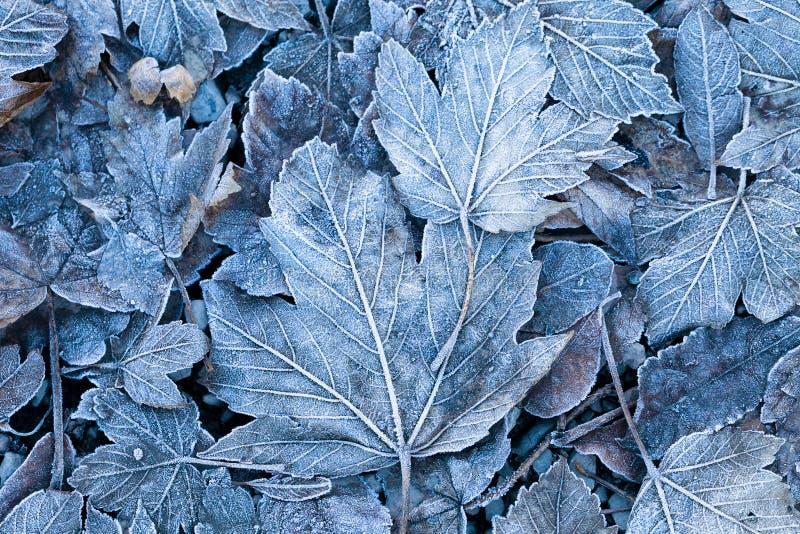 Gelée sur les feuilles, plan rapproché photo libre de droits