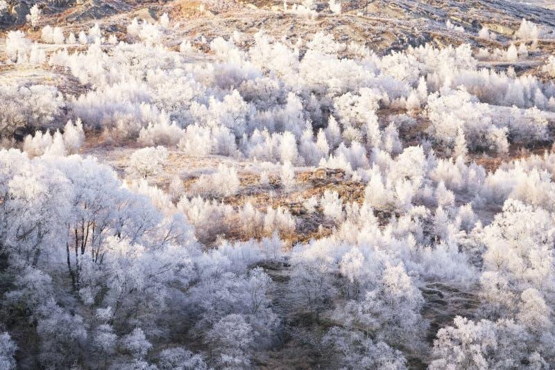 Gel de Hoar sur les arbres du lac gelé de Loch Dochart en Écosse photo libre de droits