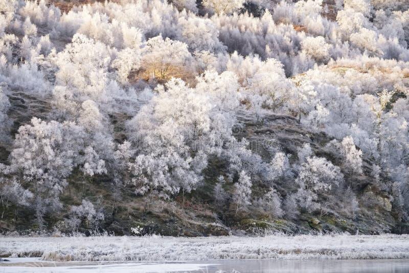 Gel de Hoar sur les arbres du lac gelé de Loch Dochart en Écosse image libre de droits