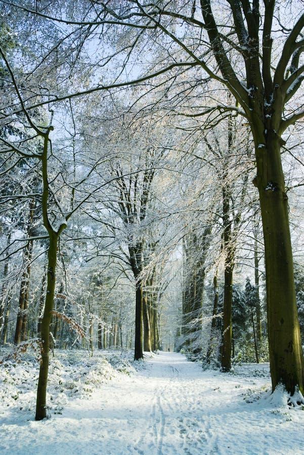 Gel Forest Tudor Brugge d'hiver photos libres de droits