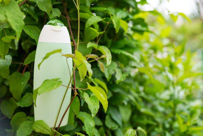 Gel ou shampooing organique avec les feuilles vertes Fond de nature avec l'espace de copie Cosm?tiques de soin de corps images libres de droits