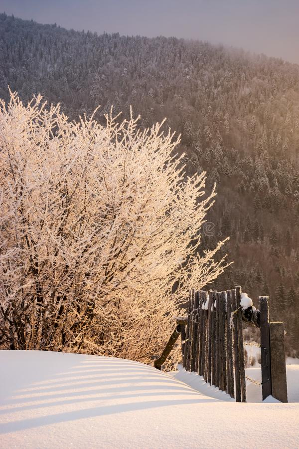 Gel rougeoyant de campagne de lever de soleil d'hiver photos libres de droits