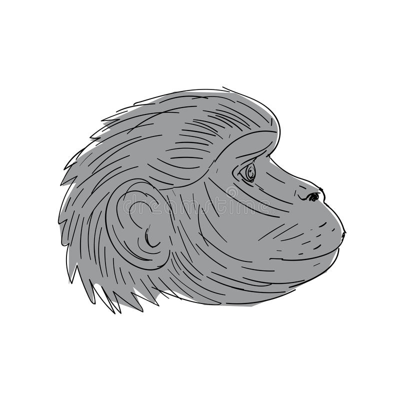 Gelada Monkey Head Side Drawing. Illustration of a Gelada Monkey Head Side view done in Drawing sketch style royalty free illustration
