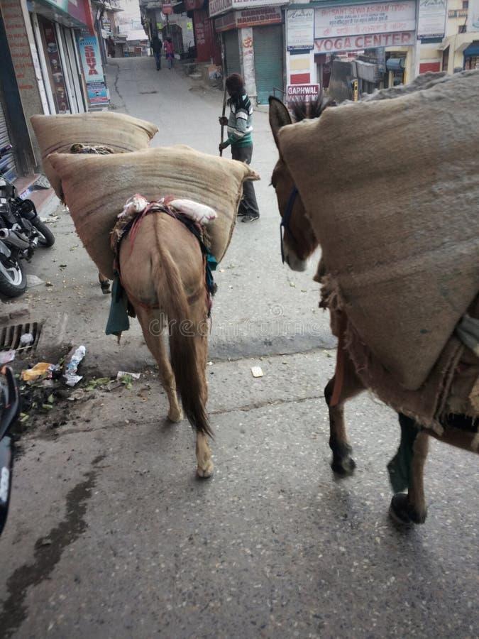 Geladene Arbeits-Maultier-Straßen von Indien lizenzfreie stockbilder
