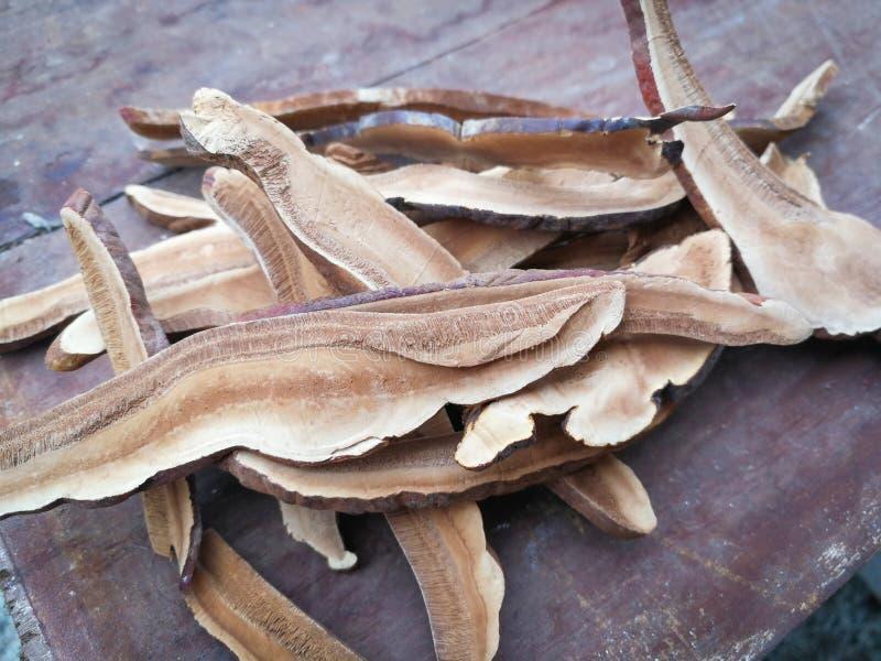 Gelakte droge Droge lingzhipaddestoel stock afbeeldingen