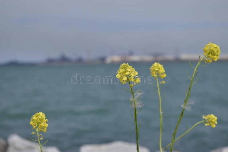 gelb lizenzfreie stockfotos