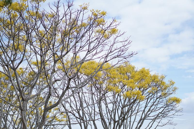 Download Gelb stockbild. Bild von kultur, pagode, haus, luft, floral - 96929077