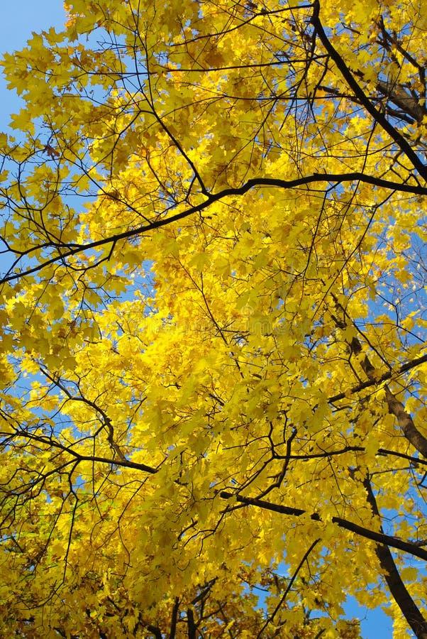 Gelb auf dem Blau stockfotos