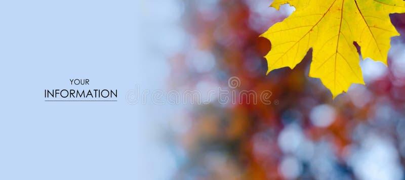 Gelb des orange Rotes lässt Herbstmuster stockfotos
